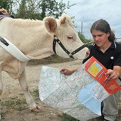 Franzose geht mit Kuh auf Wanderschaft (Bild: AFP)