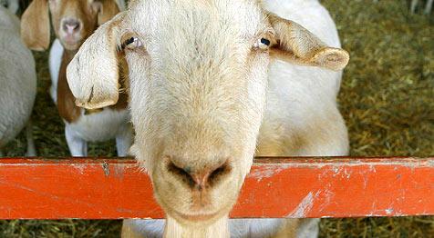 Tiere und Wandern - Urlaub am Bauernhof im Trend (Bild: dpa)