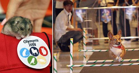 Bello und Co. kämpfen in Hongkong um Medaillen (Bild: AFP/Petmax)