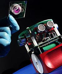 Roboter mit Rattengehirn erschaffen (Bild: AFP)