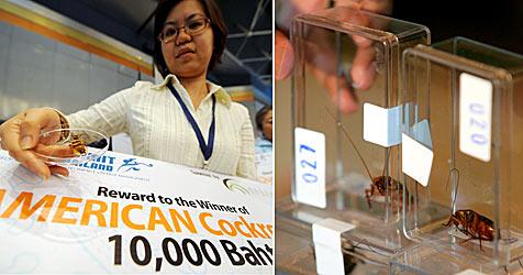 Kakerlaken-König in Thailand gekrönt (Bild: AFP)