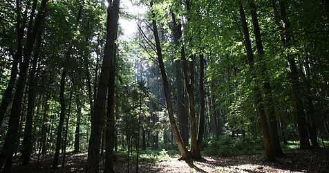 Waldarbeiter finden Kopf eines Mordopfers (Bild: Sepp Pail)
