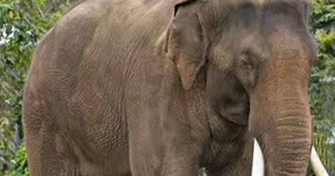 Stadt verbannt Elefanten von ihren Stränden (Bild: YouTube.com)