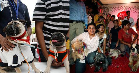 """Indische Hunde geben einander das """"Wuff""""-Wort"""