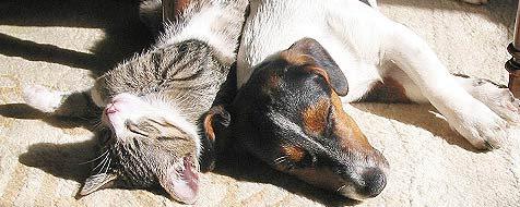 So gewöhnst du Hund und Katz aneinander (Bild: krone.at-Leserreporter Harald Pechmann)