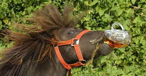 Wirtin verbannt biertrinkendes Pferd aus Pub