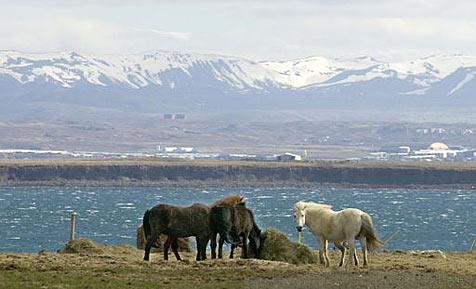 Island im Internet zum Verkauf angeboten