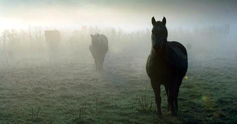 Pferd rutscht aus - Reiterin schwer verletzt (Bild: dpa/Kay Nietfeld)