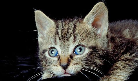 Erkenne den Charakter deiner Katze (Bild: © [2008] JupiterImages Corporation)