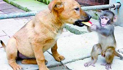 Äffchen füttert seinen Hunde-Freund mit Bananen