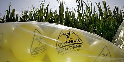 Oberösterreich droht mit Aufstand gegen Gen-Technik (Bild: dpa/A3609 Daniel Karmann)
