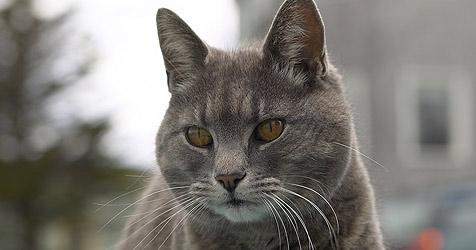 Zehn Katzen im Innviertel vergiftet (Bild: © [2008] JupiterImages Corporation)