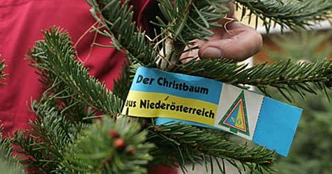 Verkauf von heimischen Christbäumen gestartet (Bild: ©weihnachtsbaum.at/Nagl)