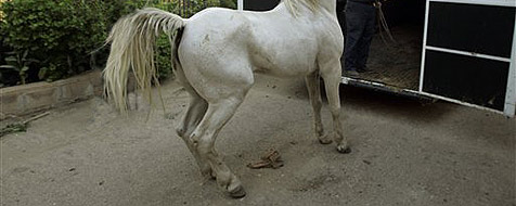 Mädchen von Pferd in Bauch getreten