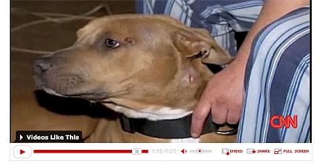 Mutiger Hund rettet Frauchen vor Einbrecher