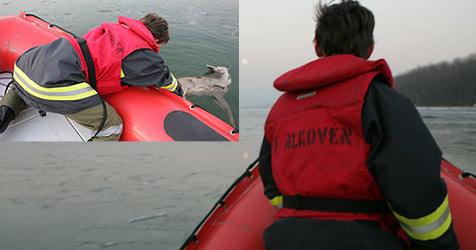 Tierdrama auf teils zugefrorener Donau (Bild: FF Alkoven/Hermann Kollinger)