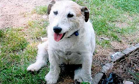 Tapferkeitsmedaille für mutigen Hund