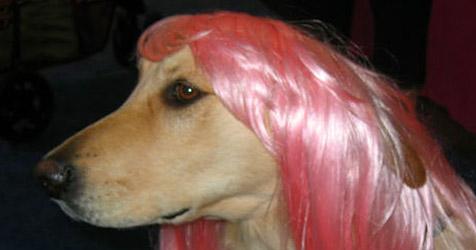Firma bietet Perücken für Hunde und Katzen an (Bild: Total Diva Pet)