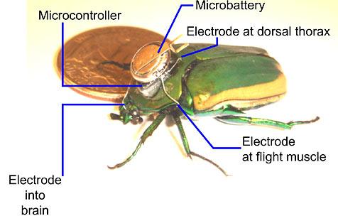 US-Forscher steuern Insekt per Mikrochip fern (Bild: www.eecs.berkeley.edu)