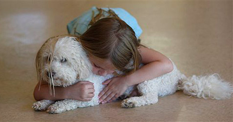 Schmusen mit Hunden keine Gesundheitsgefahr