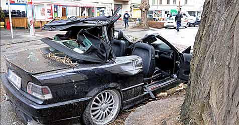 Baum stürzte auf Autos - Gärtner freigesprochen (Bild: APA/Paul Plutsch)