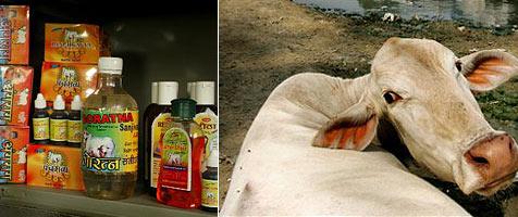Limonade aus Kuh-Urin soll Weltmarkt erobern
