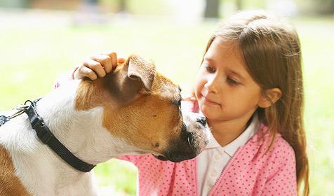 Richtiger Umgang mit fremden Hunden für Kinder (Bild: © [2009] JupiterImages Corporation)