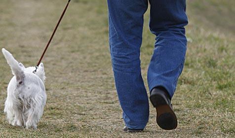 60 Prozent der Halter mit ihrem Hund überfordert (Bild: APA/HERBERT PFARRHOFER)