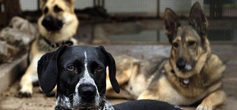 Tierheim statt Knast: Jugendliche helfen Tieren (Bild: dpa/A2411 Norbert Försterling)