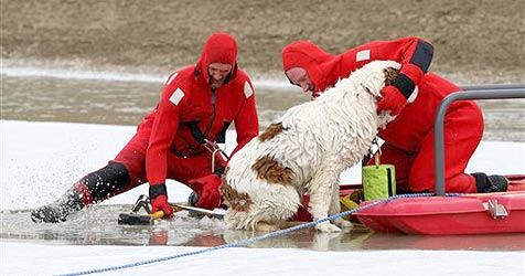 Feuerwehr rettet festgefrorenen Bernhardiner (Bild: AP)