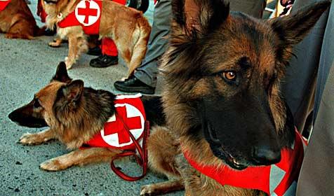 Suchhundestaffel findet vermisste Patientin (Bild: APA/PFARRHOFER Herbert)