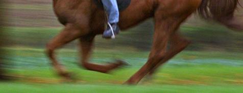 Reiterin stürzt mit ihrem Pferd in einen Bach (Bild: dpa/dpaweb/dpa/A3542 Karl-Josef Hildenbrand)