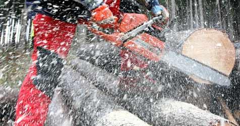 Von Baumwipfel getroffen - Arbeiter schwer verletzt (Bild: APA/HELMUT FOHRINGER)