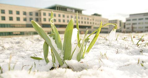 Schön wird es wohl erst im April (Bild: Markus Schütz)