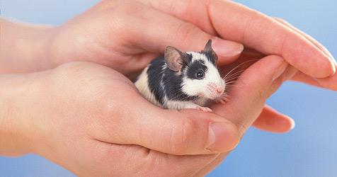 Ein Mäuschen als Haustier - Tipps für die Haltung (Bild: Fressnapf/Ulrike Schanz)