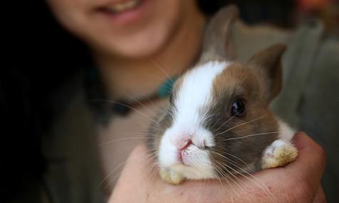 Kleines Häschen mit zwei Nasen in US-Tierladen
