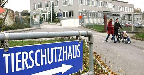 Umweltbombe tickt unter Vösendorfer Tierschutzhaus (Bild: APA/GUENTER R. ARTINGER)