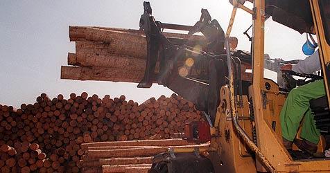 Holzunternehmen mit 5,6 Mio. Euro Schulden in Konkurs (Bild: Jürgen Radspieler)