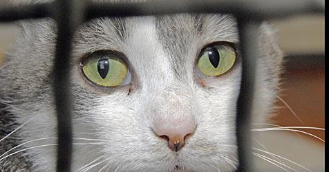 Irrer Tierhasser vergiftet Katzen (Bild: dpa/A3828 Christian Hager)