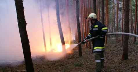Angezündeter Reisighaufen setzt Wald in Brand (Bild: APA/FF GLOGGNITZ-STADT)