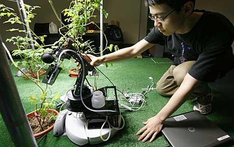 Roboter für den Tomatengarten