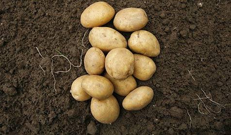 Nachbarin vertreibt Dieb mit Kartoffelhagel