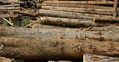 25 Zentimeter dicke Fichte fällt auf jungen Bauern (Bild: Uta Rojsek-Wiedergut)
