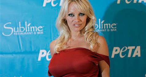 Pamela Anderson kämpft gegen die Robbenjagd