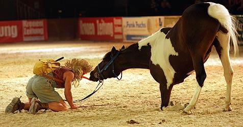 """""""Pferd 2009"""": Die Pferdemesse in Wels (Bild: Chris Koller)"""