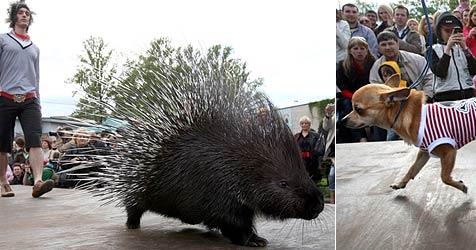Schräge Modenschau zugunsten eines Zoos (Bild: AFP)