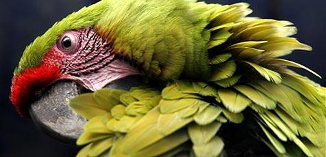 Papagei klaut Urlauber in Neuseeland den Pass