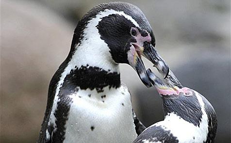 Zirkusdirektor mit Pinguinen am See