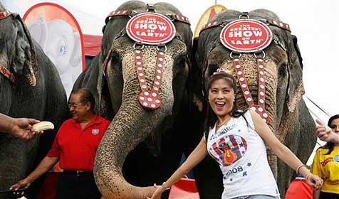 Menschen verlieren Wettessen gegen Elefanten (Bild: AP)