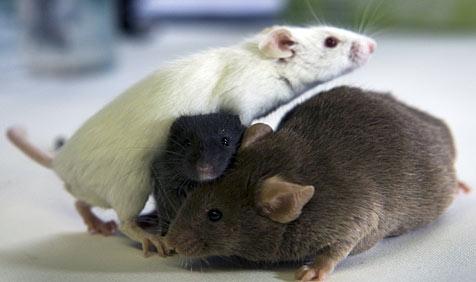 Mäusefamilie nistet sich in Beamten-Schreibtisch ein (Bild: dpa/dpa-Zentralbild/Z1003 Jens Büttner)